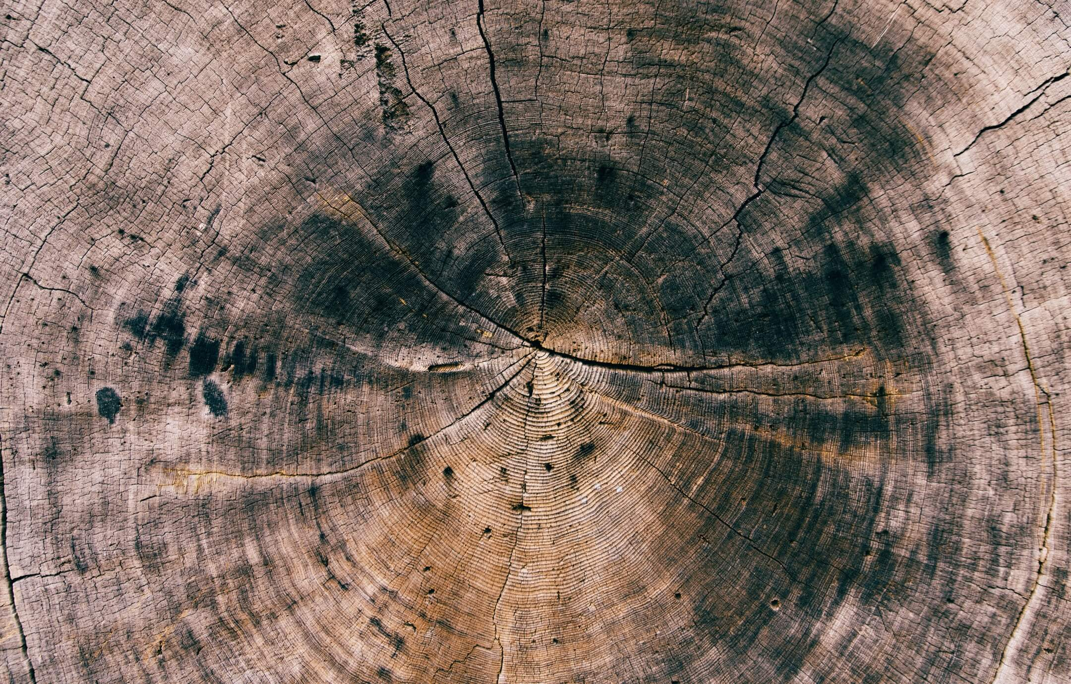 A close-up photograph of tree rings